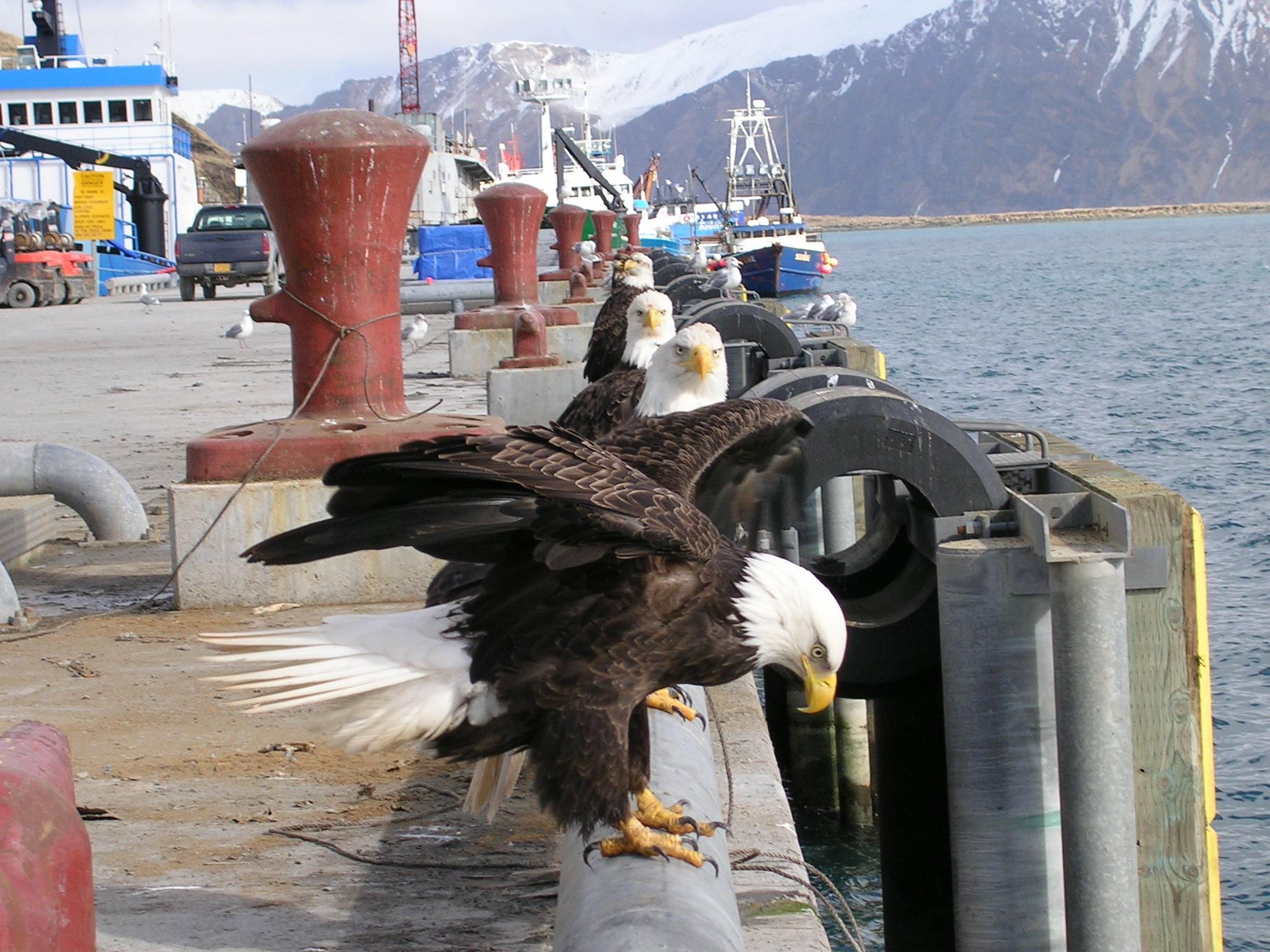 Images from dutch harbor alaska for Fishing jobs in alaska